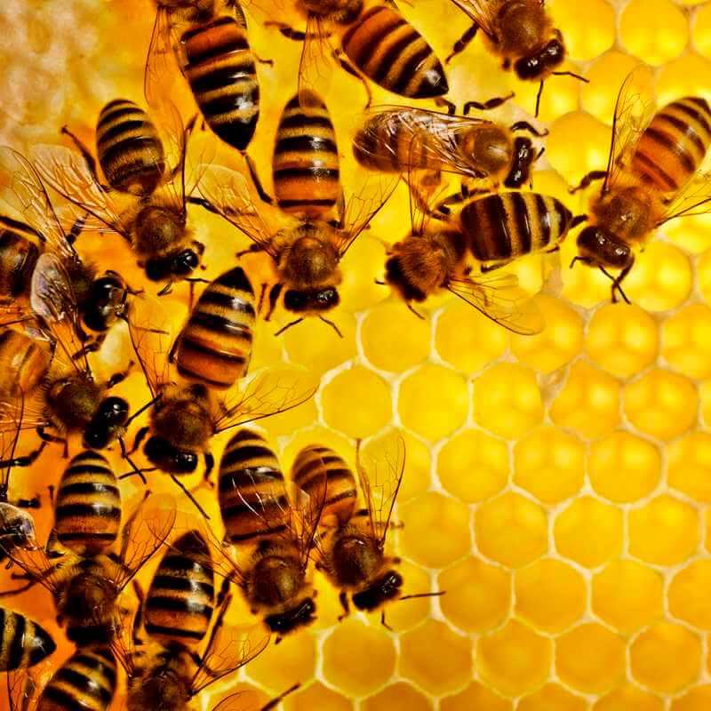 пчелинный воск