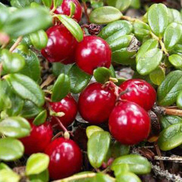 Органическая паста Liqberry из клюквы